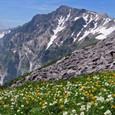 30.小蓮華岳付近のお花畑と白馬岳